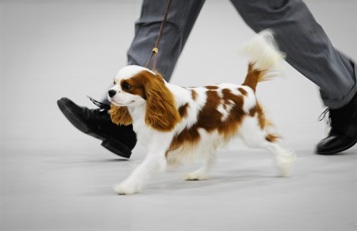 Dog Shows at the Purina Event Center