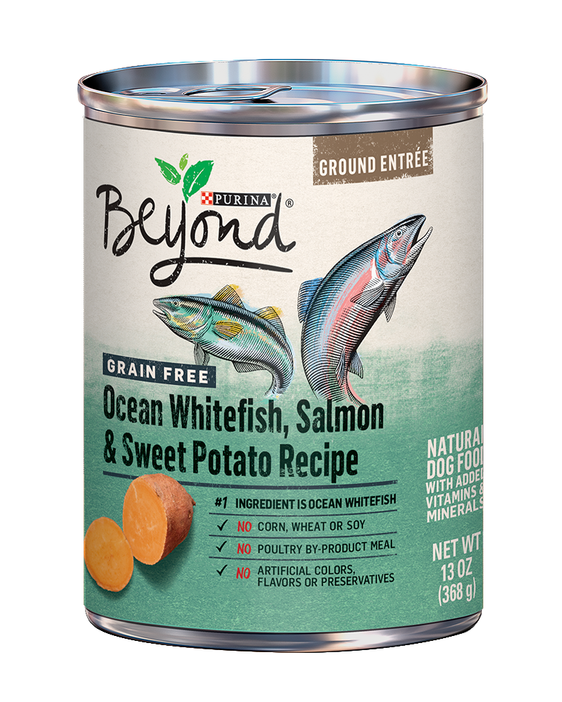 Beyond Grain Free Salmon and Sweet Potato Natural Dog Food