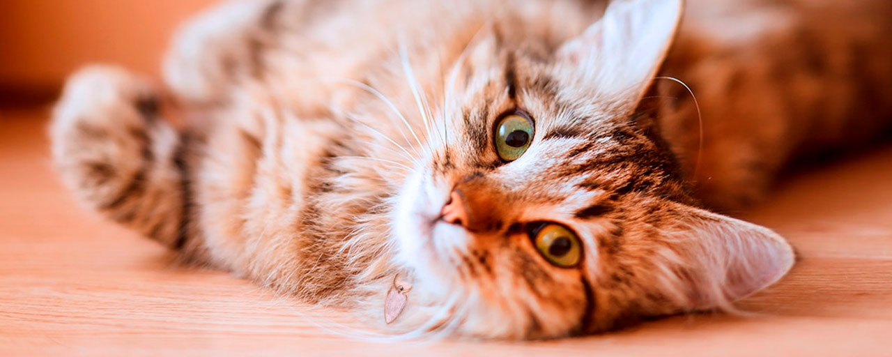 How can you tell if you cat is healthy?