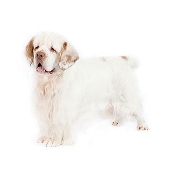 Sussex Spaniel - Purina®