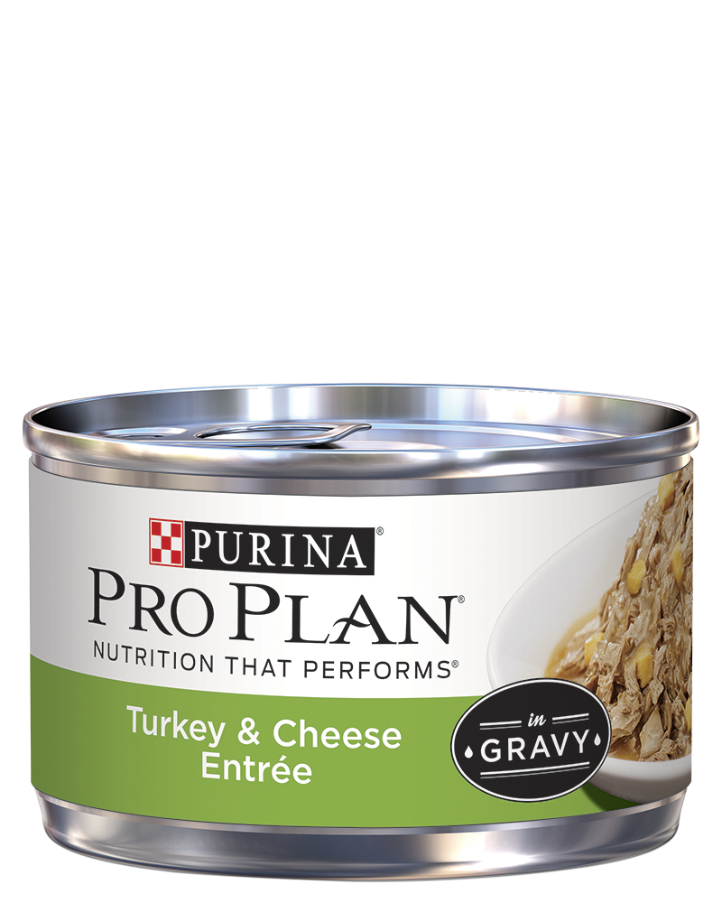 pro-plan-turkey-cheese-entree-in-gravy