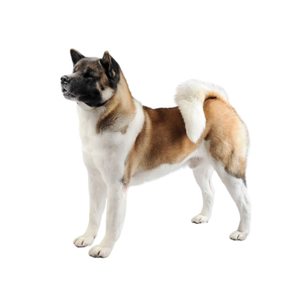 10 Medium-Sized Dog Breeds That Are Great For Families ...