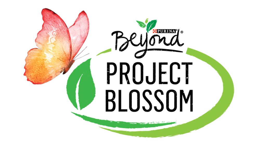 Beyond Project Blossom logo