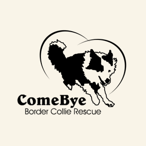 Come Bye Border Collie Rescue