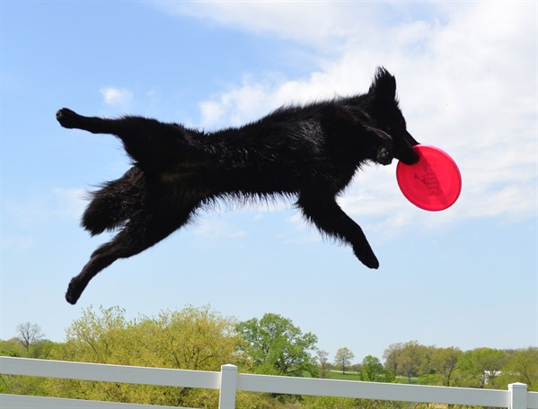 Working Dog & Flying Disc Competition Field at Purina Farms