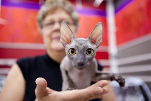 Cat Shows at the Purina Event Center