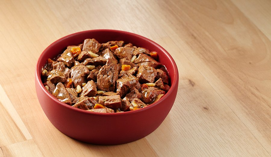 Can You Feed Your Dog Dry Cat Food