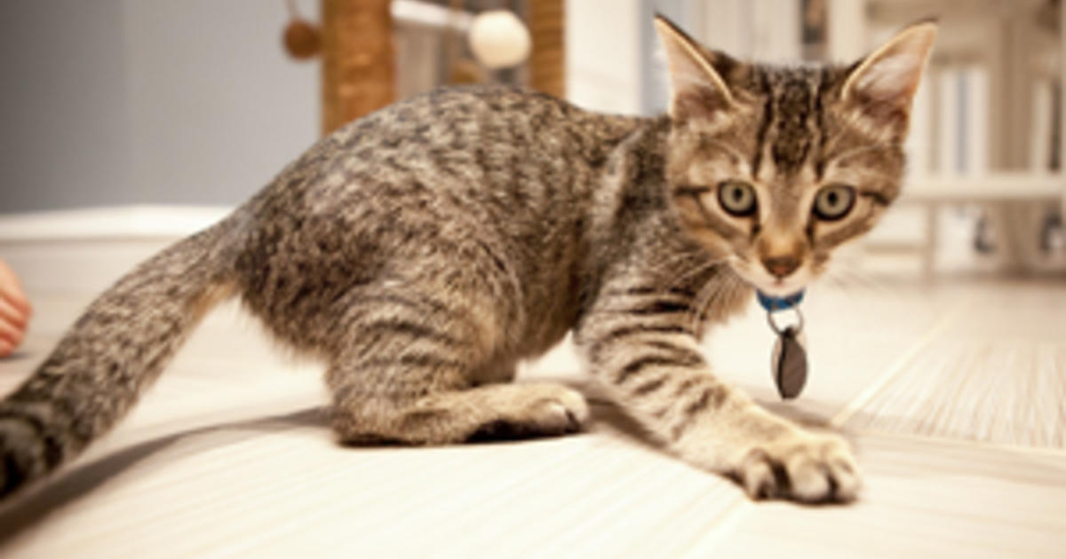 New Kitten's First Few Weeks at Home | Purina