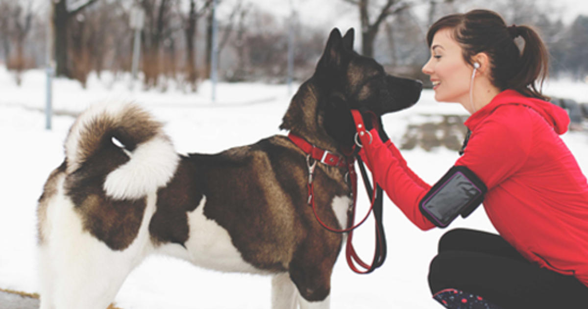 6 Winter Safety Tips for Dogs in Snow | Purina