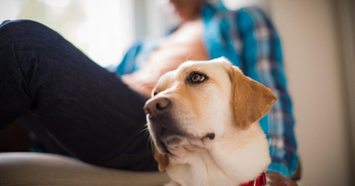 Pets Bring Kids With Autism Out Of >> How Pets Can Transform The Lives Of Children With Autism Purina