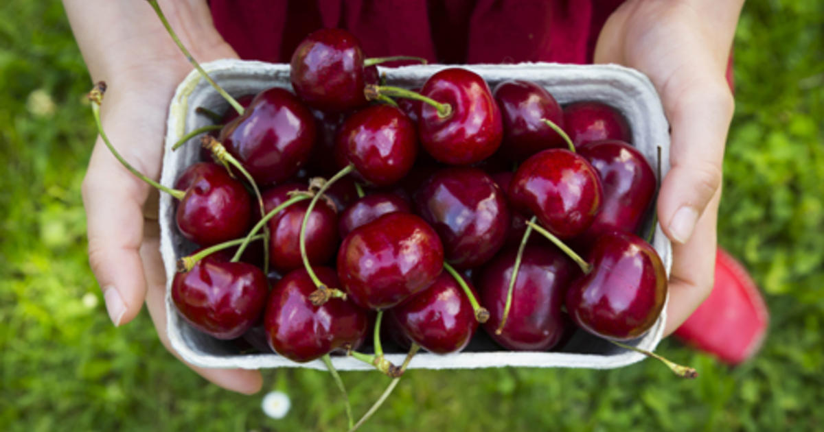 Can Dogs Eat Cherries Purina
