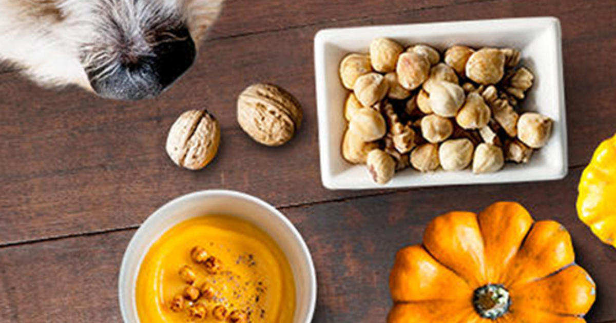 Can Dogs Eat Pumpkins Sweet Potatoes And Nuts Purina