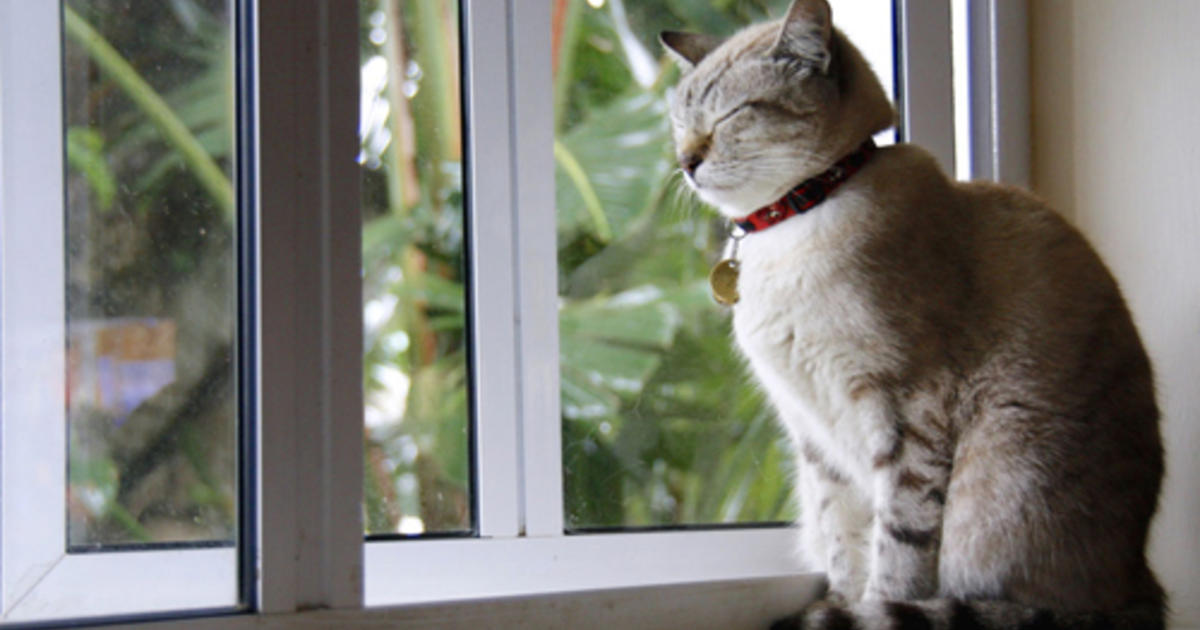 Traveling with Cats: Cat-Friendly Destinations | Purina