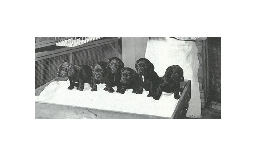 Row of Puppies