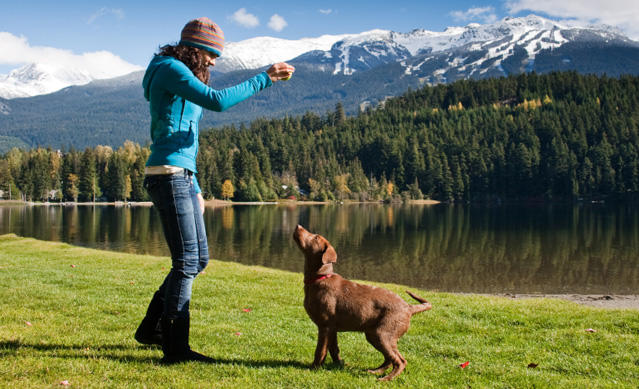 Dog training with hand signals