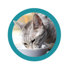 purina-one-cat-food-reviews