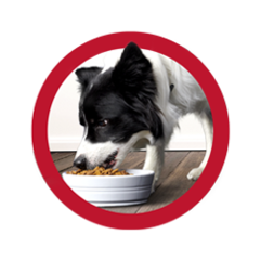 purina-one-dog-food-reviews