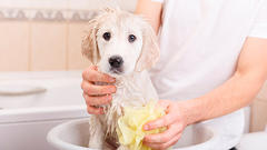 puppy getting a bath