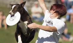 Disc Dog Training Thumbnail