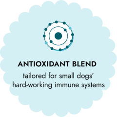 antioxidant blend tailored for small dogs' hard-working immune systems