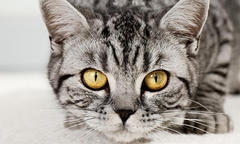Can Cats Detect Seizures