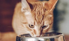 how-to-read-cat-food-labels-500x300