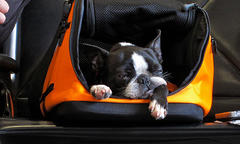dog sleeping in an open orange pet carrier