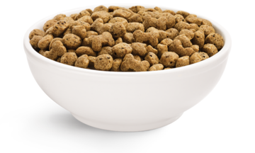 beneful-dry-dog-food