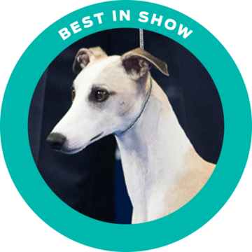 2018-national-dog-show-best-in-show-winner-whiskey_500x500