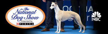 2018-national-dog-show-best-in-show_2880x990.jpg