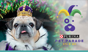 pug dressed up for the Purina Pet Parade