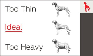 Dog Body Conditions chart