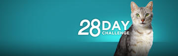Purina oNE 28 Day Challenge Info Cat hero