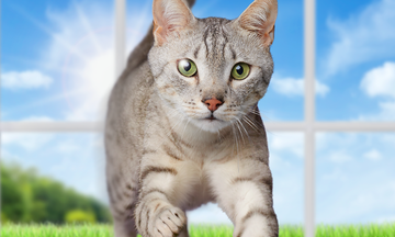 purina one 28 day challenge for cats CTA