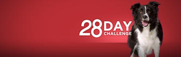 Purina oNE 28 Day Challenge Info Dog hero