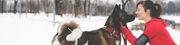 6 winter safety tips for dogs in snow