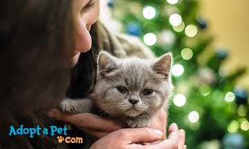 Fancy Feast Adopt a Pet Holiday Cat CTA