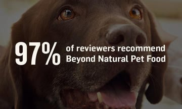 Beyond 97 Percent Review Image Dog