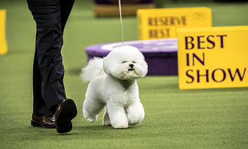 Purina's History with the National Dog Show