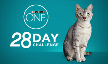 purina-one-cat-ar-vr