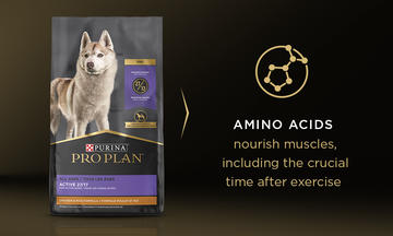 AMINO ACIDS   nourish muscles, including the crucial time after exercise