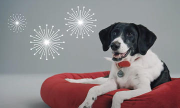 dog with fireworks illustration