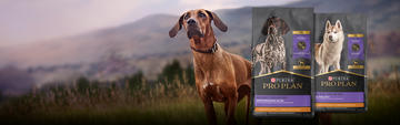 Dog in front of mountains with sport formula dry dog package images