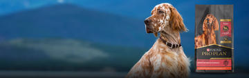 Dog in front of mountains with sensitive systems dry dog package image