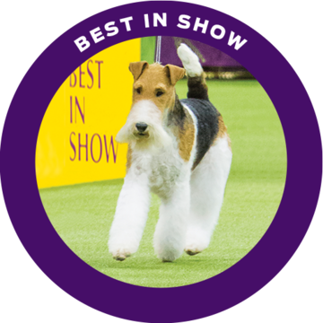 king-westminster-best-in-show-2019