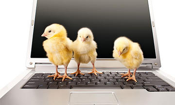 Purina Farms virtual baby chicks on computer