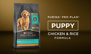 Pro Plan Shredded Blend Chicken & Rice Puppy Food