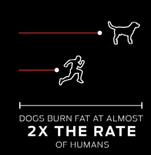 DOGS BURN FAT AT ALMOST 2X THE RATE OF HUMANS