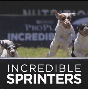 INCREDIBLE SPRINTERS