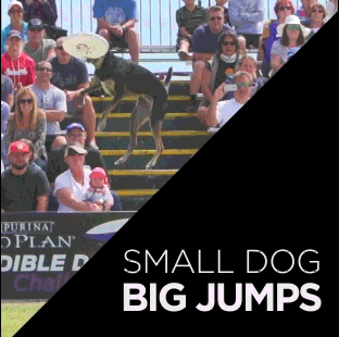 SMALL DOG BIG JUMPS